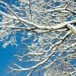 ニューヨークの季節 冬が長い・・が夏は短い