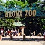 一度は行ってほしいBronx Zoo