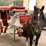 2016年からニューヨークの名物 「馬車で観光」がなくなるかも?
